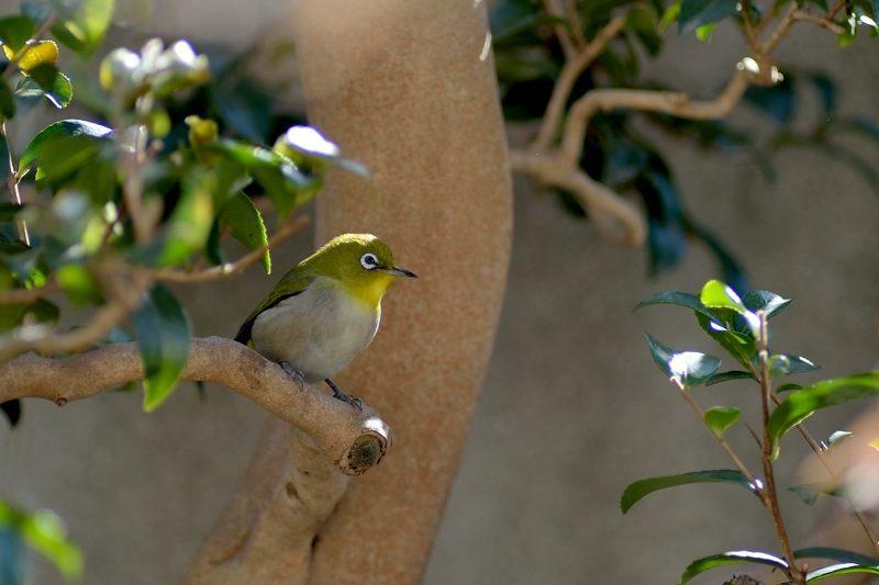 今季庭にやってきた野鳥たち_c0330563_11345731.jpg