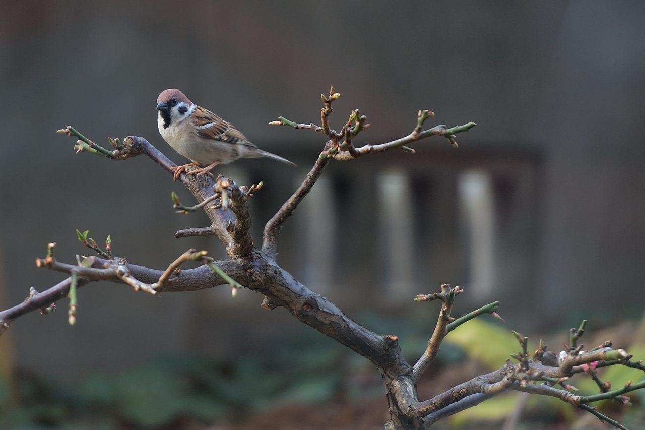 今季庭にやってきた野鳥たち_c0330563_11352933.jpg