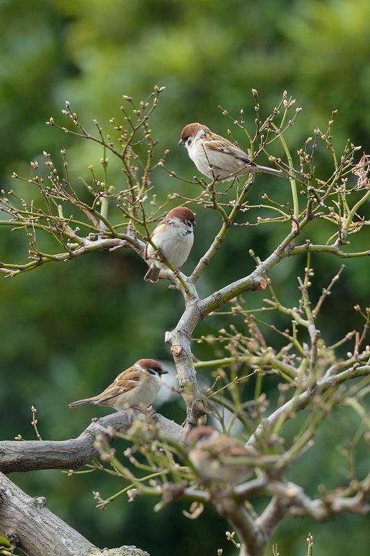 今季庭にやってきた野鳥たち_c0330563_11355093.jpg