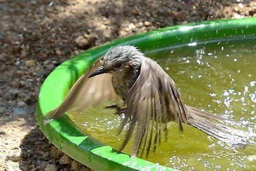 今季庭にやってきた野鳥たち_c0330563_11363079.jpg