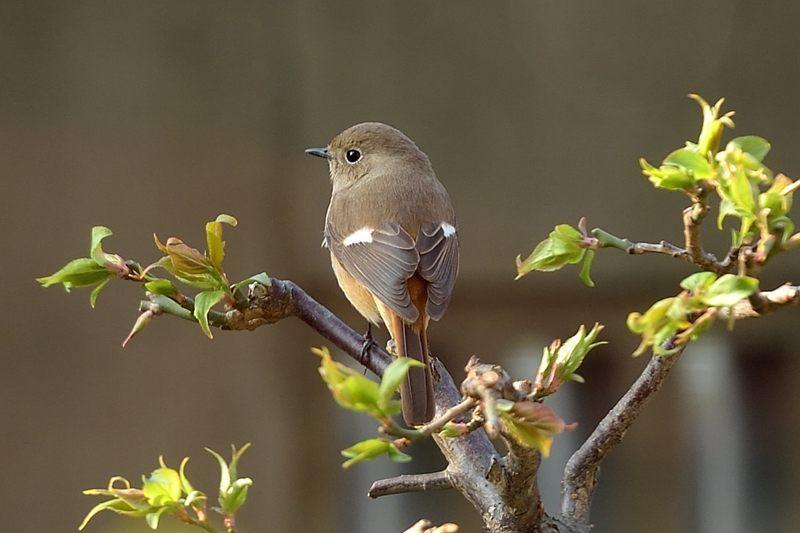 今季庭にやってきた野鳥たち_c0330563_11364348.jpg