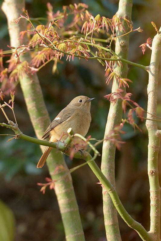 今季庭にやってきた野鳥たち_c0330563_11370464.jpg