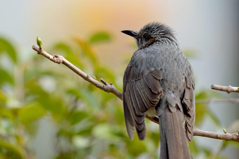 今季庭にやってきた野鳥たち_c0330563_11373211.jpg