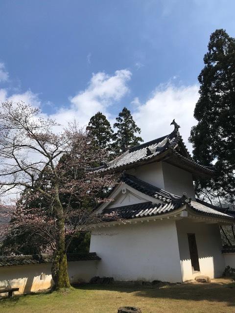 城崎へ 出石の桜_f0204295_13580257.jpg