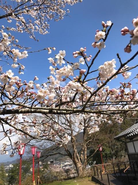 城崎へ 出石の桜_f0204295_13581195.jpg