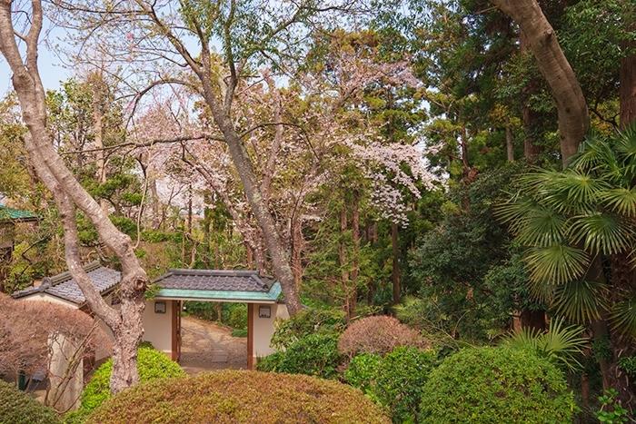 満開の桜を眺めながら至福のランチ ローストビーフ鎌倉山本店_b0145398_23571808.jpg