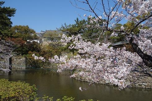 岡崎城公園_a0152501_18542488.jpg
