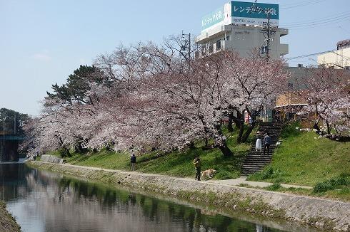 岡崎城公園_a0152501_18543391.jpg