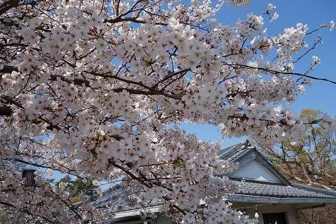 岡崎城公園_a0152501_18545135.jpg