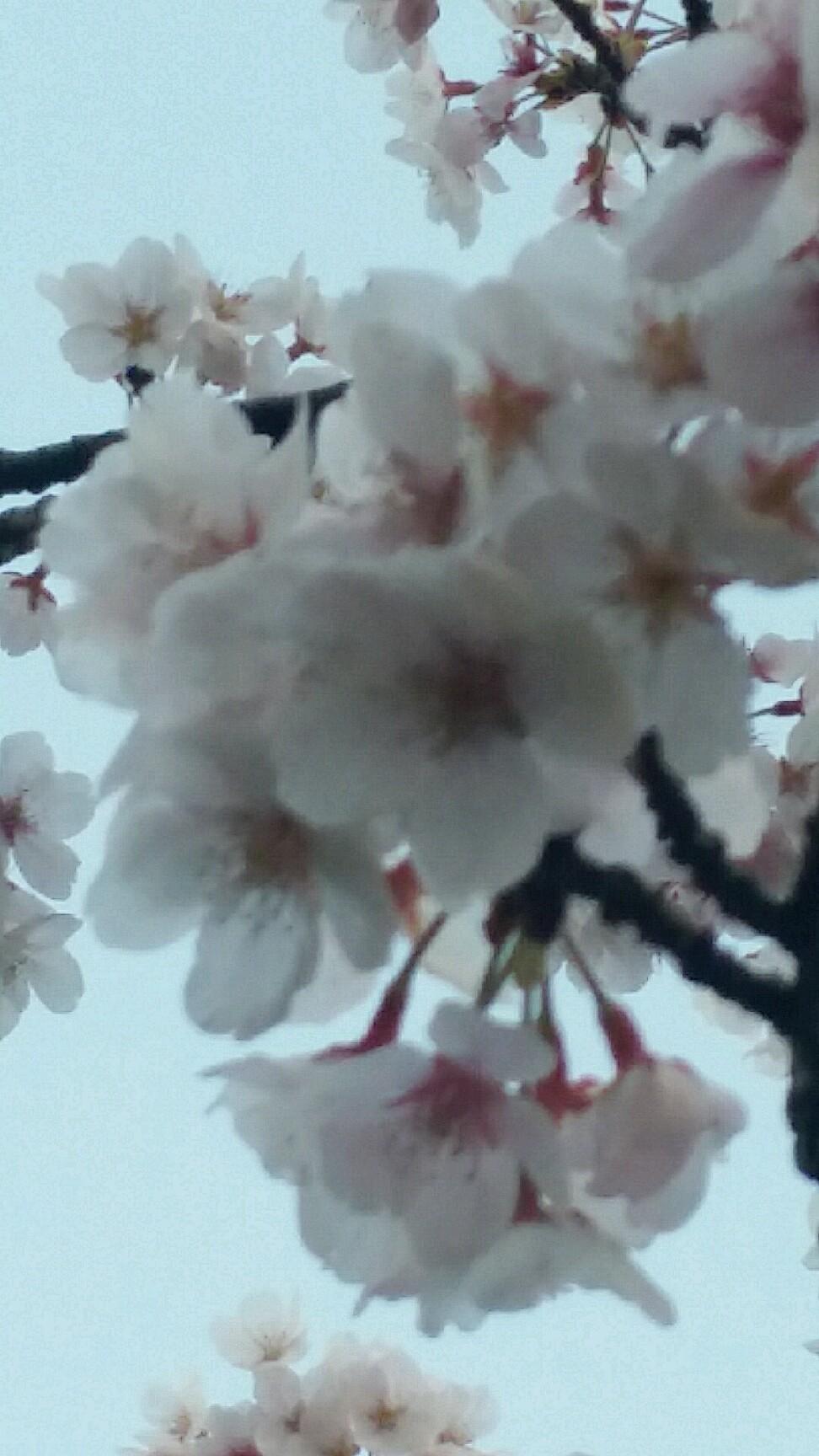 横須賀ゲートボール連..._d0092901_09552714.jpg