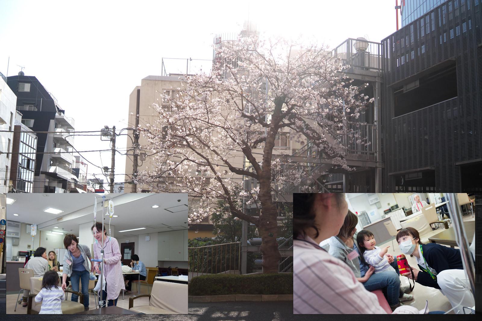 桜咲く。_a0271402_18050021.jpg