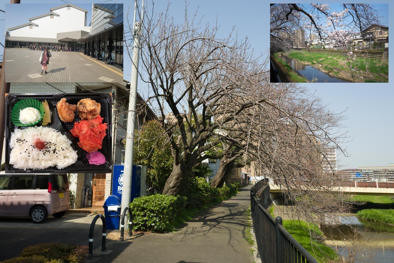 我が社の桜は未だ。_a0271402_18050046.jpg