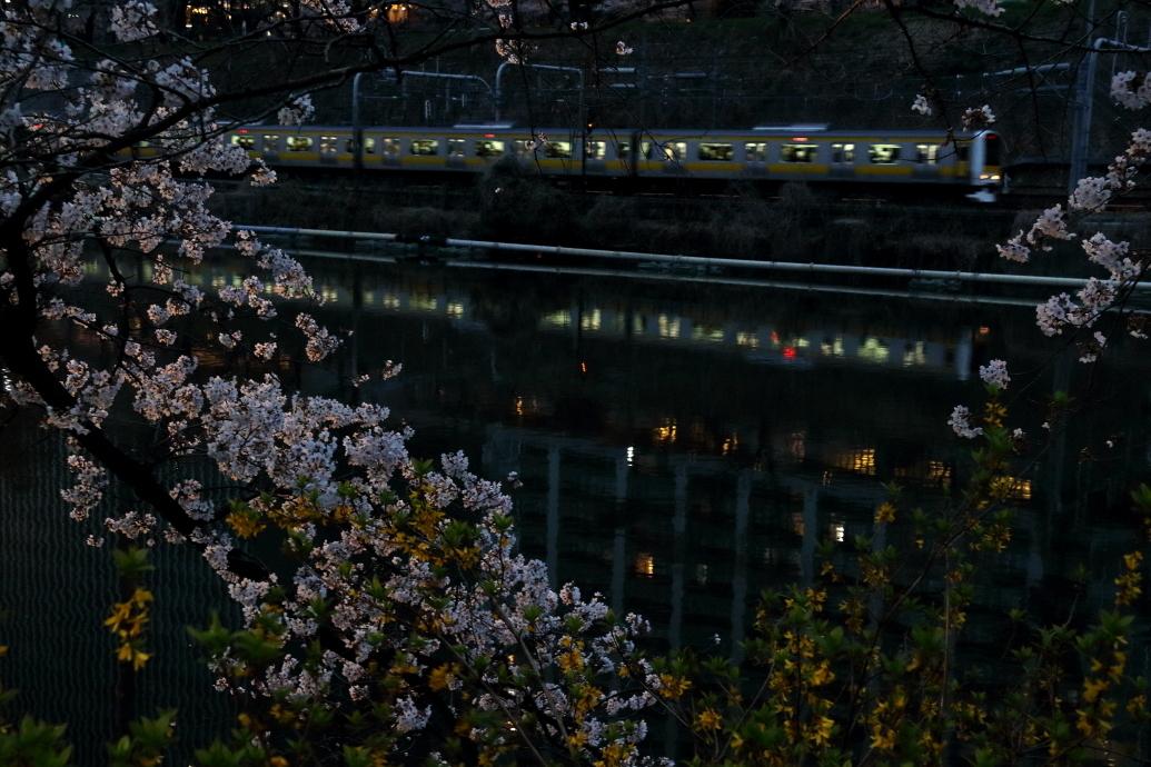 夜桜 2019_b0190710_23361132.jpg