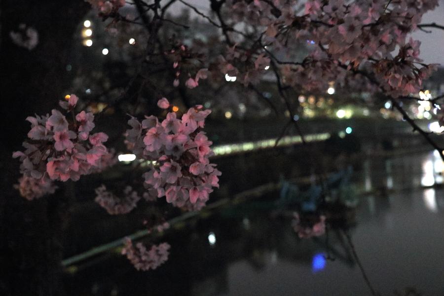 夜桜 2019_b0190710_23361149.jpg