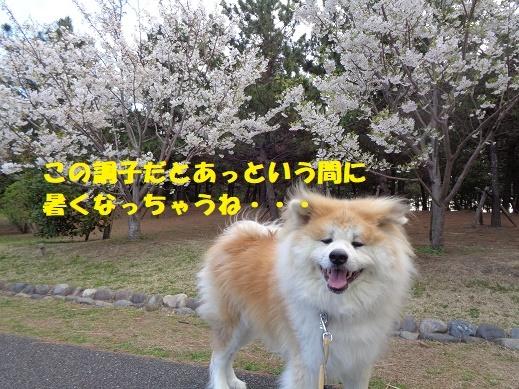 f0121712_16173522.jpg