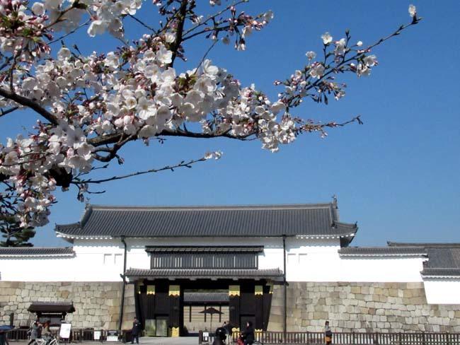桜満開 二条城_e0048413_20464693.jpg