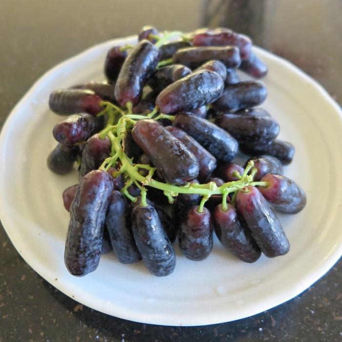 新種のブドウ Sweet Sapphire_d0154118_18503358.jpg