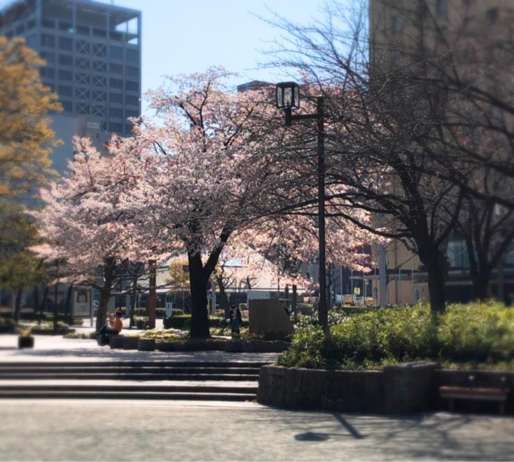 桜満開_c0170233_09382478.jpg