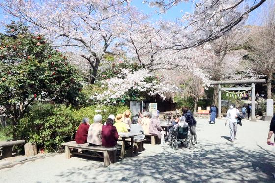 パンレク ~ 桜のちぎりパン ~_e0222340_1744171.jpg