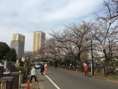まえ散歩 at 谷中 桜五分咲きの谷中を、西日暮里から千駄木まで歩いてみる_b0177242_11232170.jpg