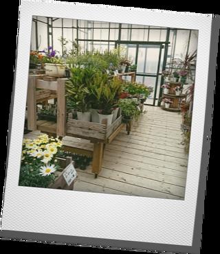 Botanical Shop & Farmers Cafe Ca-Gaさんへ_d0155744_17094345.png