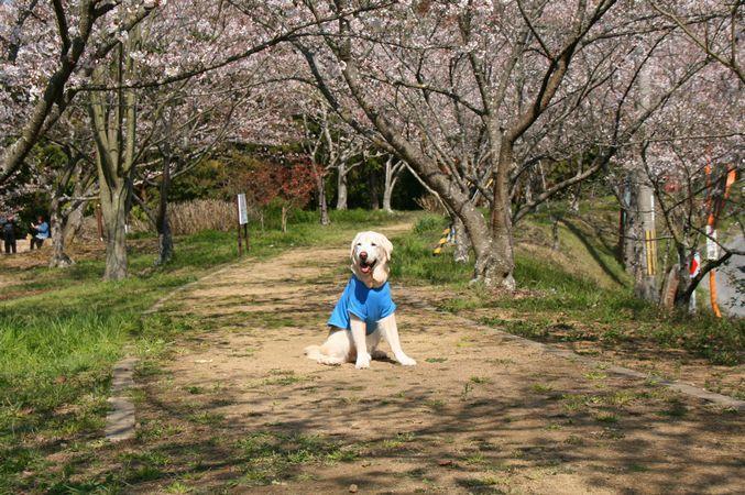 えびすと桜と子供たち_e0364854_17065495.jpg