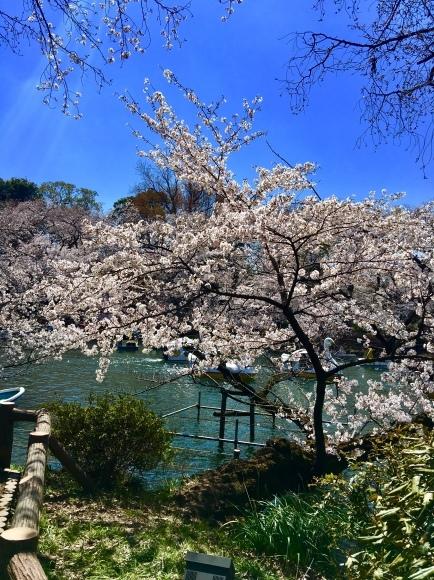 平成ラストの桜ですね。_f0000655_22090380.jpeg