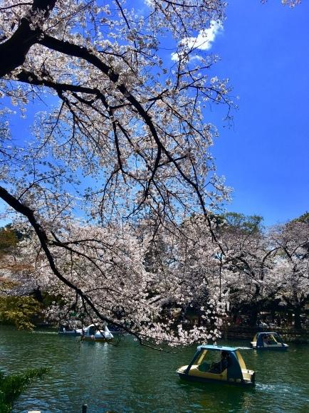 平成ラストの桜ですね。_f0000655_22092284.jpeg