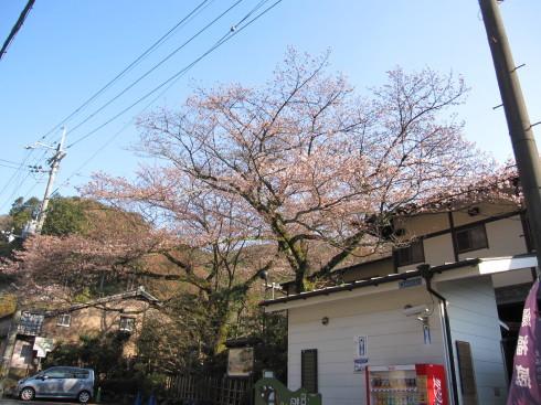 2019年4月4日 桜実況中継_c0078659_18311270.jpg