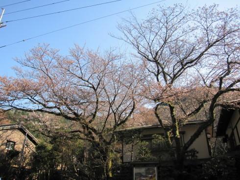 2019年4月4日 桜実況中継_c0078659_18402668.jpg