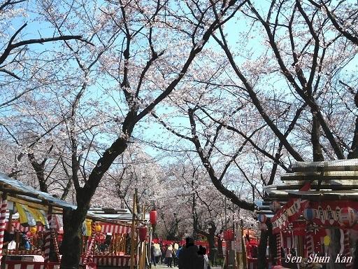 平野神社の桜が見頃です  2019年4月4日_a0164068_14345443.jpg