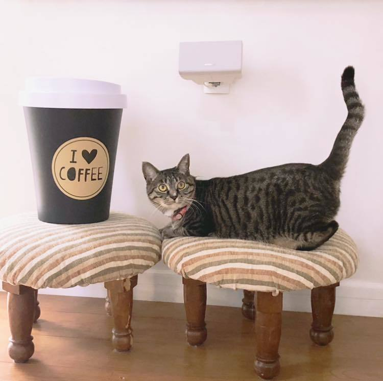 Big coffee!?_b0195783_10321542.jpg