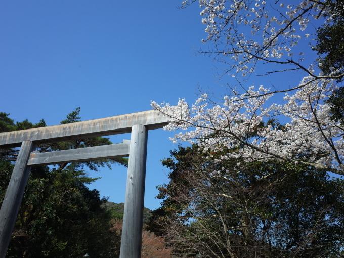 伊勢の桜 2019_c0188784_18514521.jpg