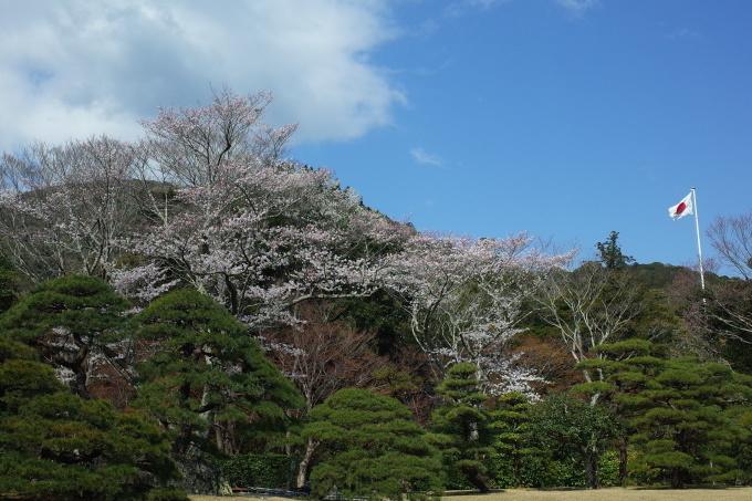 伊勢の桜 2019_c0188784_18560514.jpg