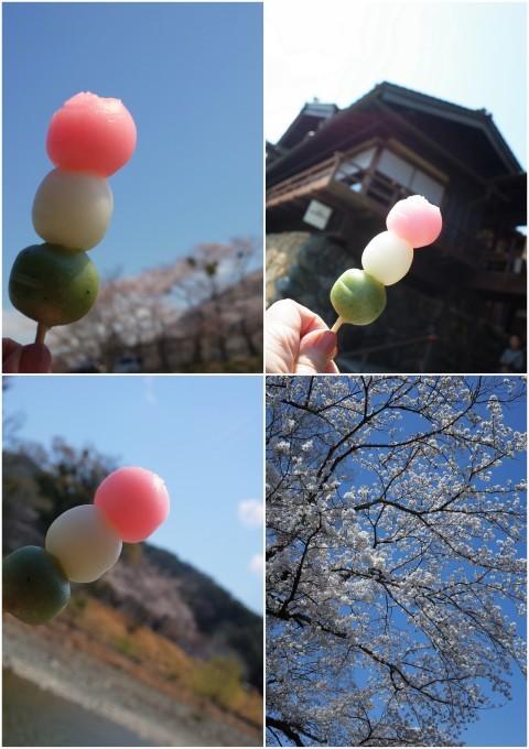 伊勢の桜 2019_c0188784_19223376.jpg