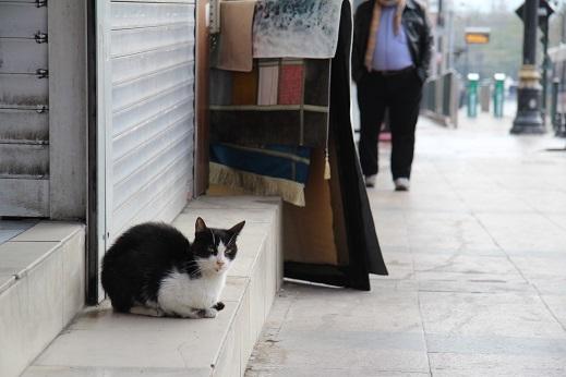 Kedi seyahat イスタンブールの旅 2_e0061785_21202659.jpg