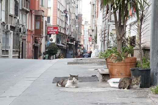 Kedi seyahat イスタンブールの旅 3_e0061785_21335637.jpg