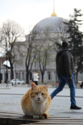 Kedi seyahat イスタンブールの旅 6_e0061785_22033289.jpg