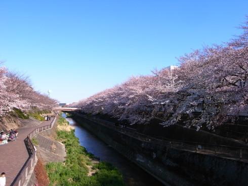 桜散歩@石神井公園2019_d0122797_16255076.jpg