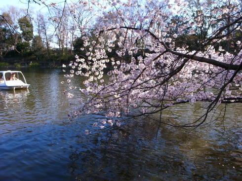 桜散歩@石神井公園2019_d0122797_16283064.jpg