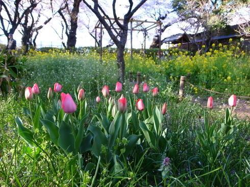桜散歩@石神井公園2019_d0122797_16301253.jpg