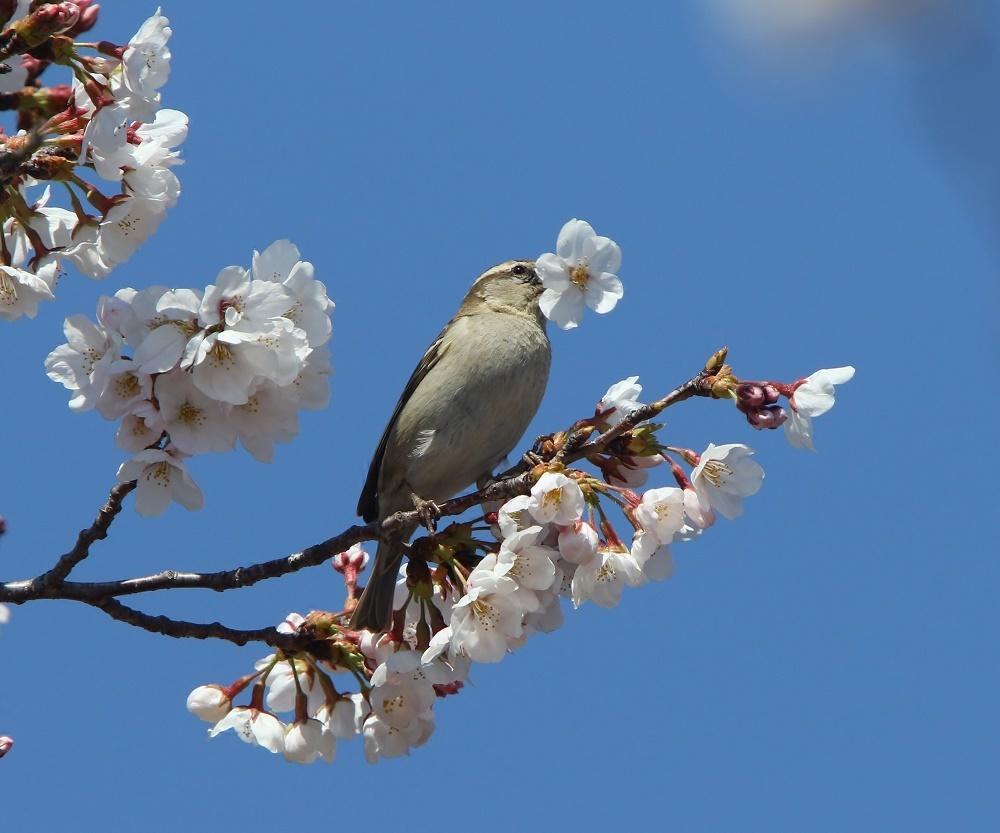 桜の花びらを、、_f0305401_15460899.jpg