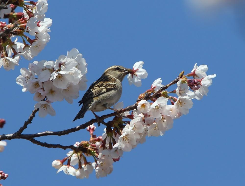 桜の花びらを、、_f0305401_15461493.jpg