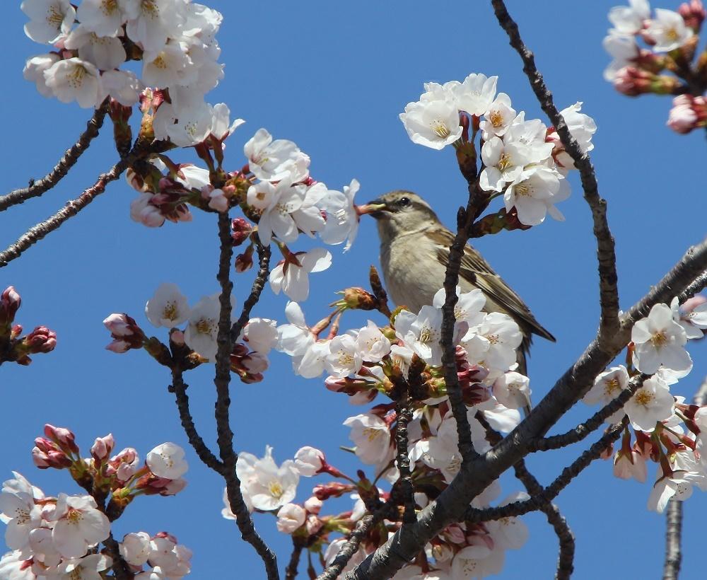 桜の花びらを、、_f0305401_15461925.jpg