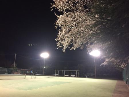 夜桜庭球部_f0043905_09342939.jpg
