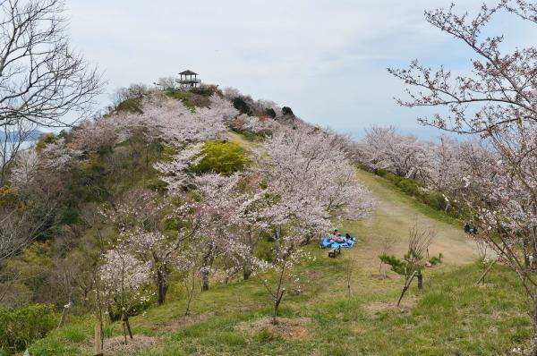 高津子山 桜_c0367107_12223487.jpg