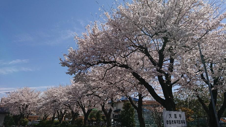 4/5  東京の桜2019@大昌寺 (日野市)_b0042308_14472147.jpg