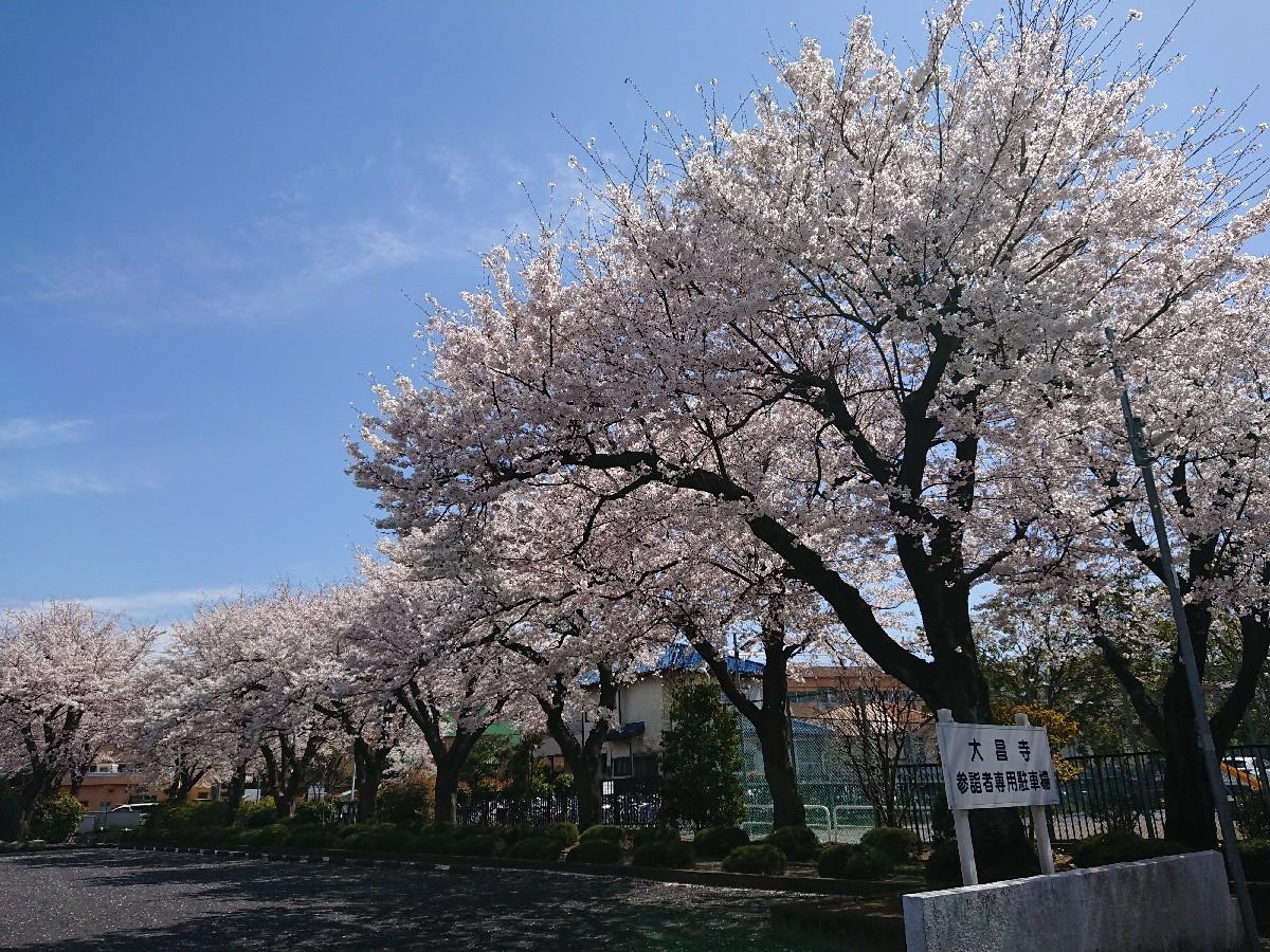 4/5  東京の桜2019@大昌寺 (日野市)_b0042308_14472196.jpg