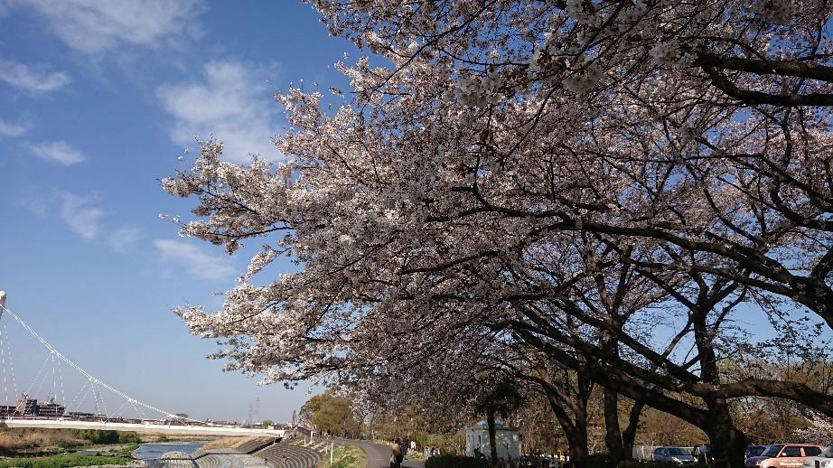 4/5  東京の桜2019Vol.2 @万願寺歩道橋(浅川ふれあい橋)_b0042308_15545542.jpg