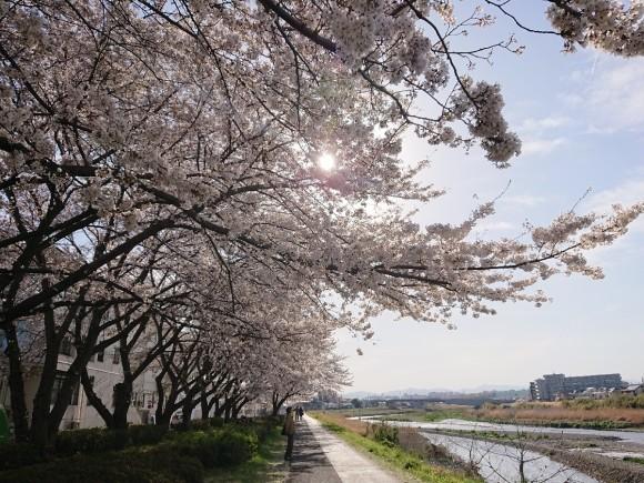 4/5  東京の桜2019Vol.2 @万願寺歩道橋(浅川ふれあい橋)_b0042308_15545544.jpg